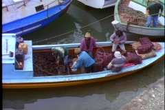 Chile Puerto Varas, fishermen unloading mussels, wide shot Stock Footage