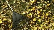 Rake lying on autumn leaves Stock Footage