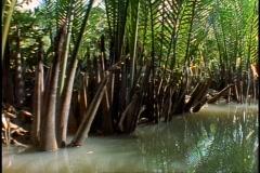 Vietnam jungle, small river, canoe, POV, close-up passing palms Stock Footage