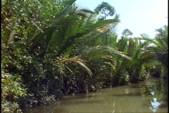 Vietnam jungle, small river, canoe, POV, palms overhang Stock Footage
