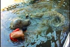Crocodiles in a pool with a young boy, Thai Crocodile Farm Stock Footage