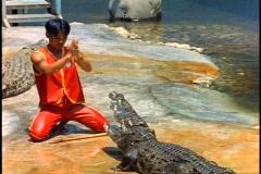 Boy bows in front of crocodile, medium shot, Thai Crocodile Farm Stock Footage