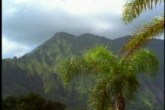 Mountains and palms on Oahu in Hawaii, pan left Stock Footage