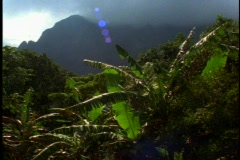 Stock Video Footage of Green jungle and rainforest on Oahu in Hawaii, pan left, glint of sun