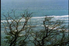 Ocean with leafless trees, backlight, on Oahu in Hawaii Stock Footage