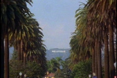 Palm tree lined street in Hancock Park, Hollywood sign in distance Stock Footage