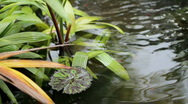 Stock Video Footage of Pond With Foliage