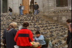 Pigeons with man and feed Stock Footage
