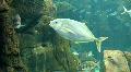 Underwater Madeira 4793e (5/5) Footage