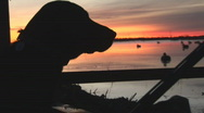 Stock Video Footage of Sunrise Hunting Dog