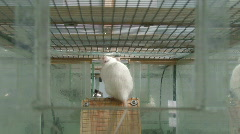 Rats in laboratory 6 Stock Footage
