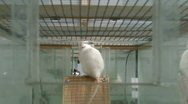 Stock Video Footage of Rats in laboratory 6