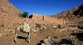 Saint Catherine's Monastery. Sinai Peninsula. Egypt Footage