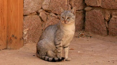 Egyptian cat Stock Footage