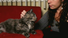 Stock Video Footage of Girl petting Cat on red couch