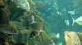 Underwater Madeira 4793a (1/5) HD Footage