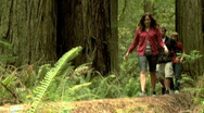 Stock Video Footage of three young people walking on a log in a forest of giant sequoias