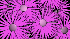 t208 girly flowers pink background motion - stock footage