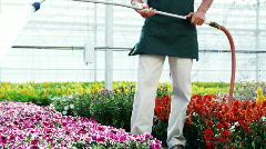 MS TU Shop assistant watering plants in a nursery / Salem, Utah, USA. Stock Footage
