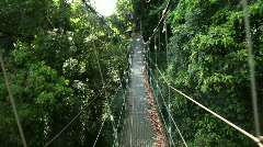 Bridge in a rainforest Stock Footage