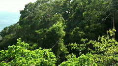 Man riding a zipline through the rainforest Stock Footage