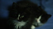 Two black cats on a bed Stock Footage