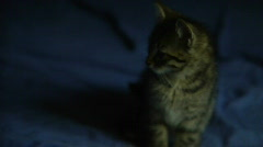 Sitting and staring cat Stock Footage