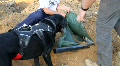 Canine Search and Recovery Footage