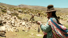 Handworking farming Woman with Lamas on meadow in PERU, South America Stock Footage