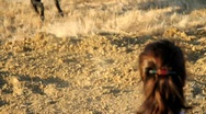 Canine Search and Rescue Dog Stock Footage