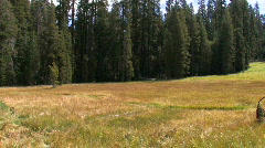 A meadow in Yosemite National Park Stock Footage