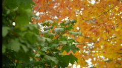 Leaves rack focus Stock Footage