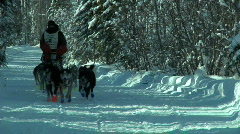 Dogsled - stock footage