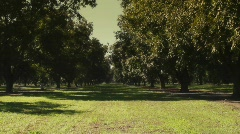 Pecan Orchard Stock Footage