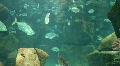 Underwater Madeira 4796c (3/3) Footage