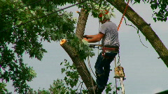 An arborist cutting down a tree piece by piece. Stock Footage