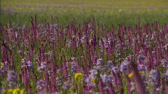 Wildflowers Sawtooth Mountain Range 02 Stock Footage