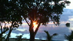 Sunset in front of tree Stock Footage