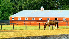 horse and red barn - stock footage