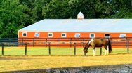 Horse and red barn Stock Footage