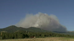 Wildfire with cow Stock Footage