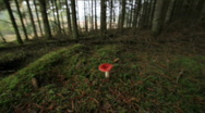 Stock Video Footage of Mushroom in forest