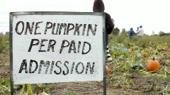 One pumpkin per paid admission sign - stock footage