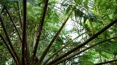 Tree fern pan Stock Footage