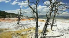 Mammoth Hot Springs BigWeb Stock Footage