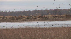 Duck Hunting Arkansas Stock Footage
