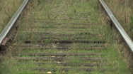 Stock Video Footage of Abandoned Railway metal Rails reclaimed by Nature (zoom out)