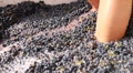 Feet Wine Grape Crushing HD Footage