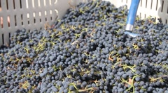 Putting grapes in press Stock Footage