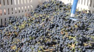 Stock Video Footage of Putting grapes in press